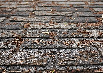 Lewis and Son Roofing Images
